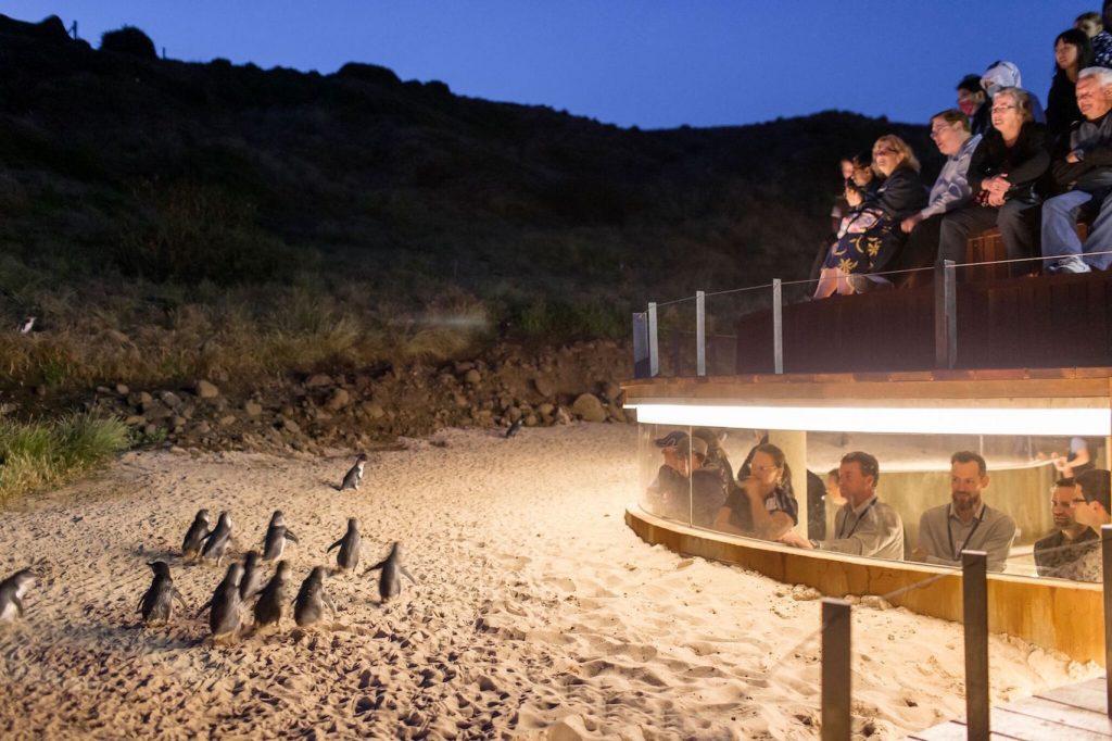 企鵝島一日遊