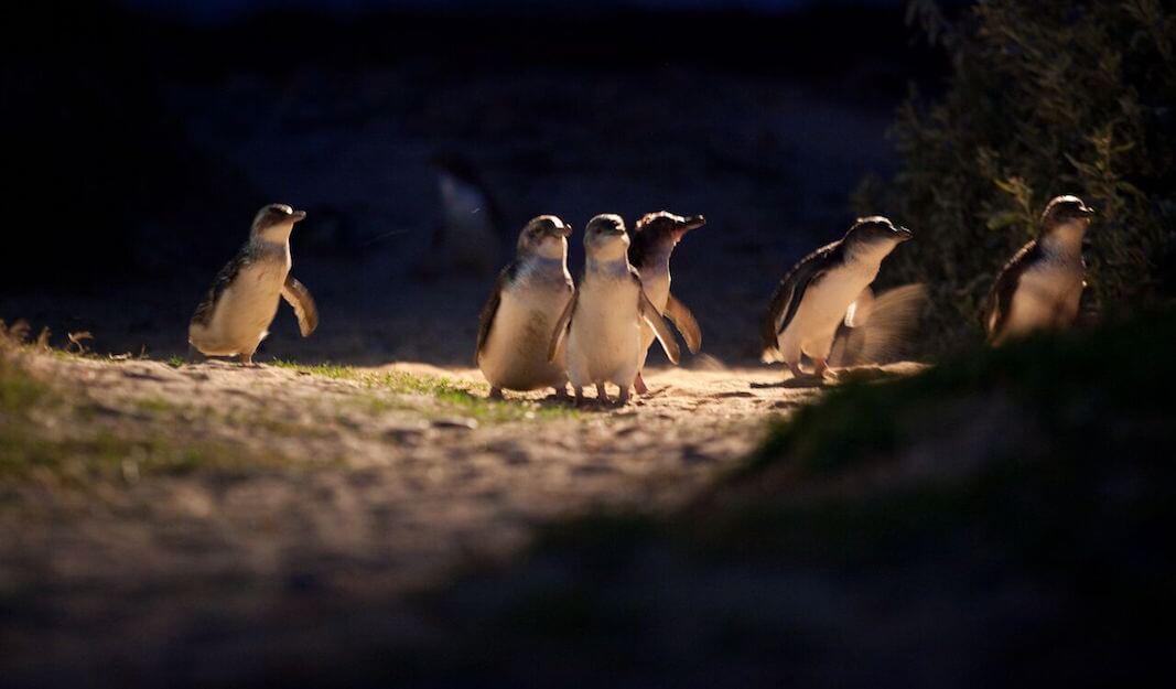 企鵝島包車服務